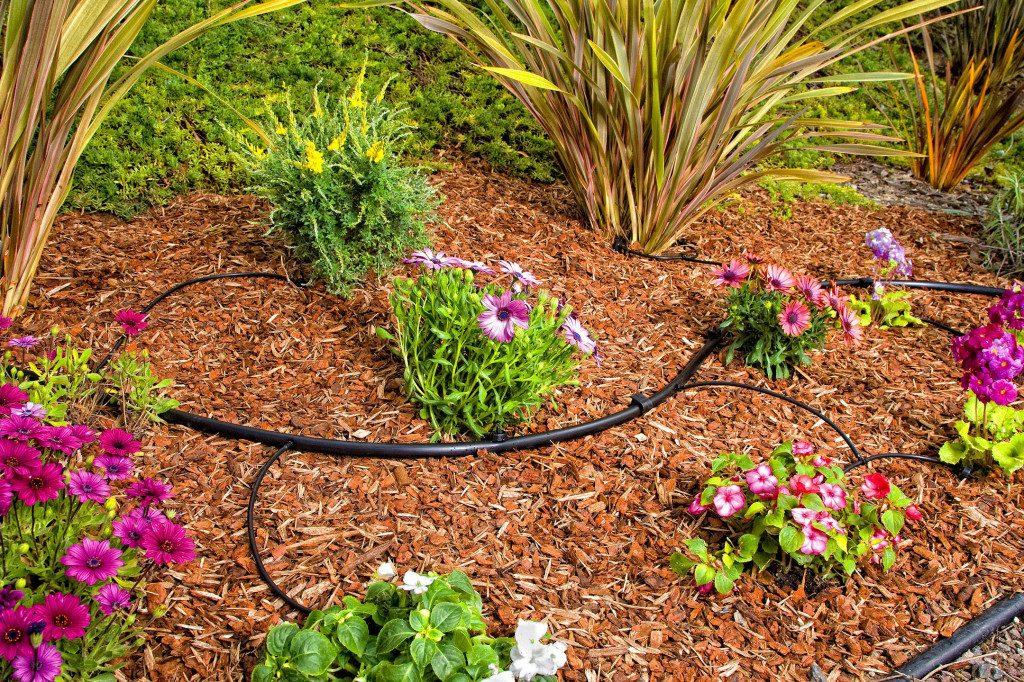 Sprinklers & Drainage Landscaping Escondido